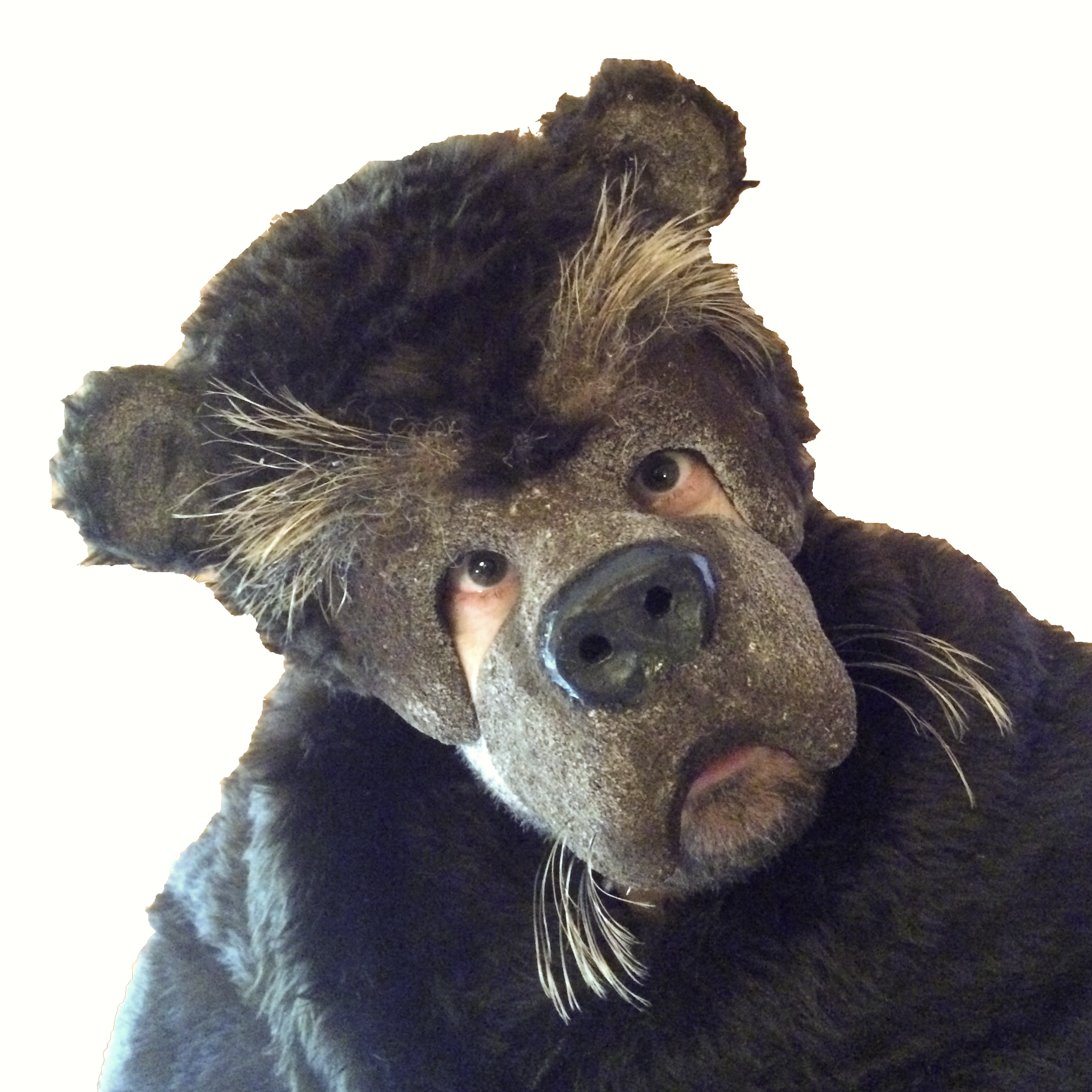 Bear mask, ours